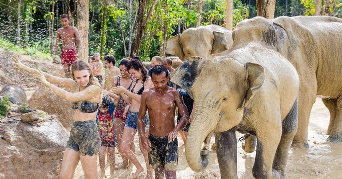 Phuket fil ciftligi, fillerle eglence, besleme, fil binme, bebek fil,