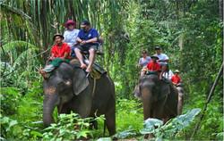 elephant safari in phang nga