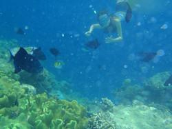 snorkeln in Phuket tours