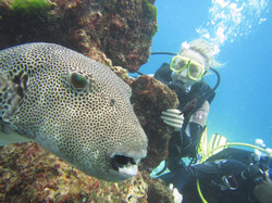 Diving Tours with private guide
