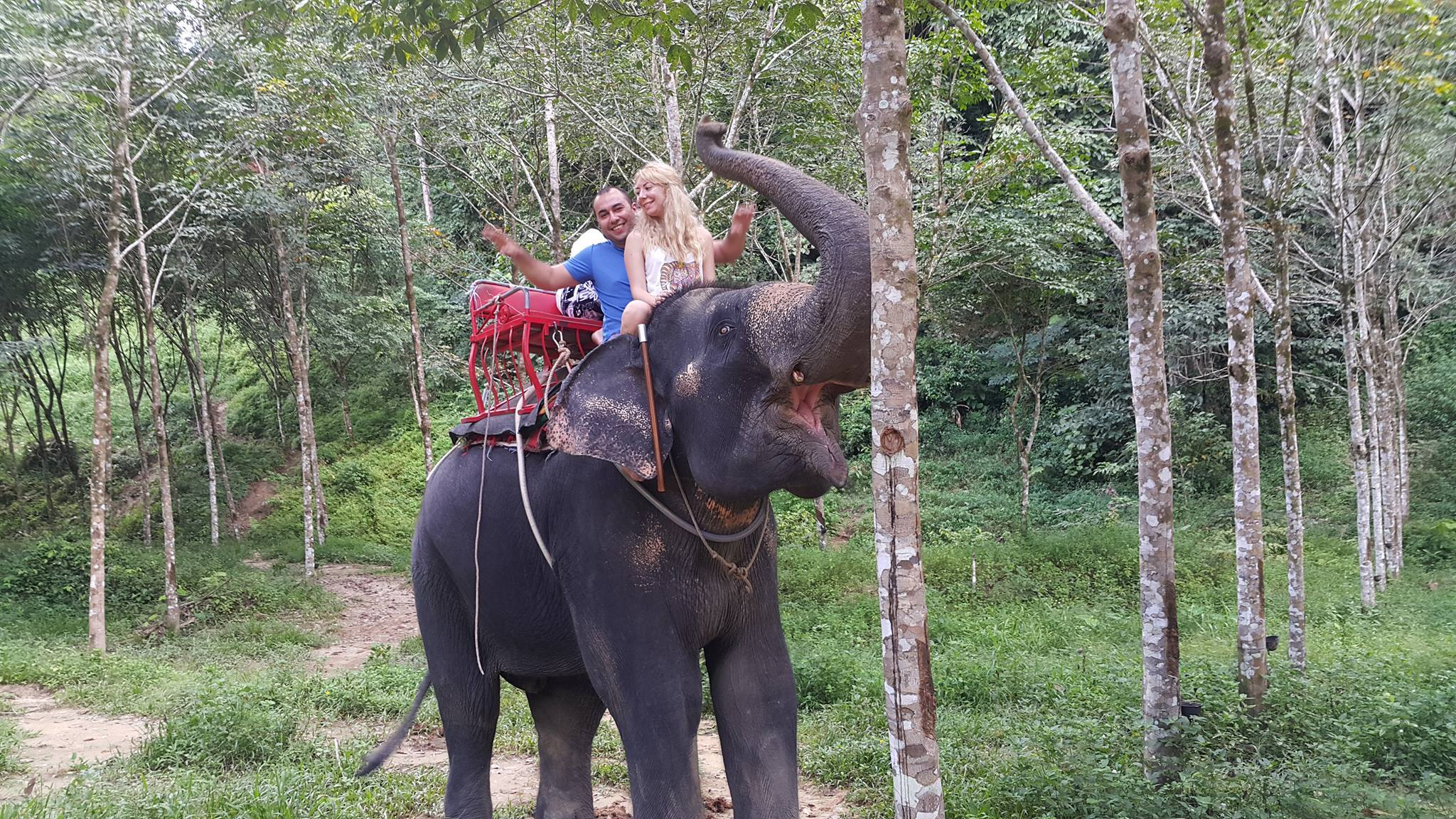Elephant Safari Phuket
