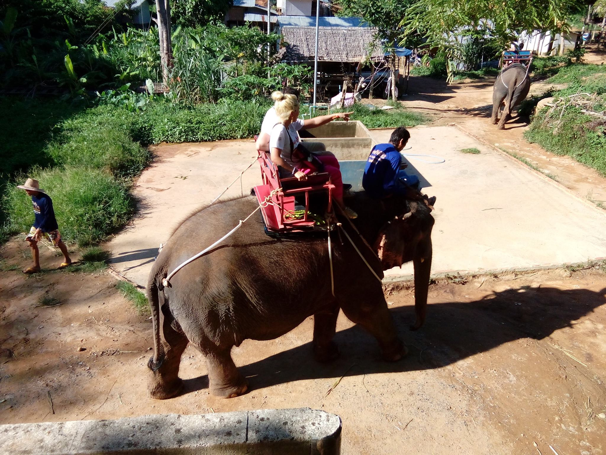 elephants and phuket