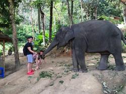 feeding baby elephant city tour
