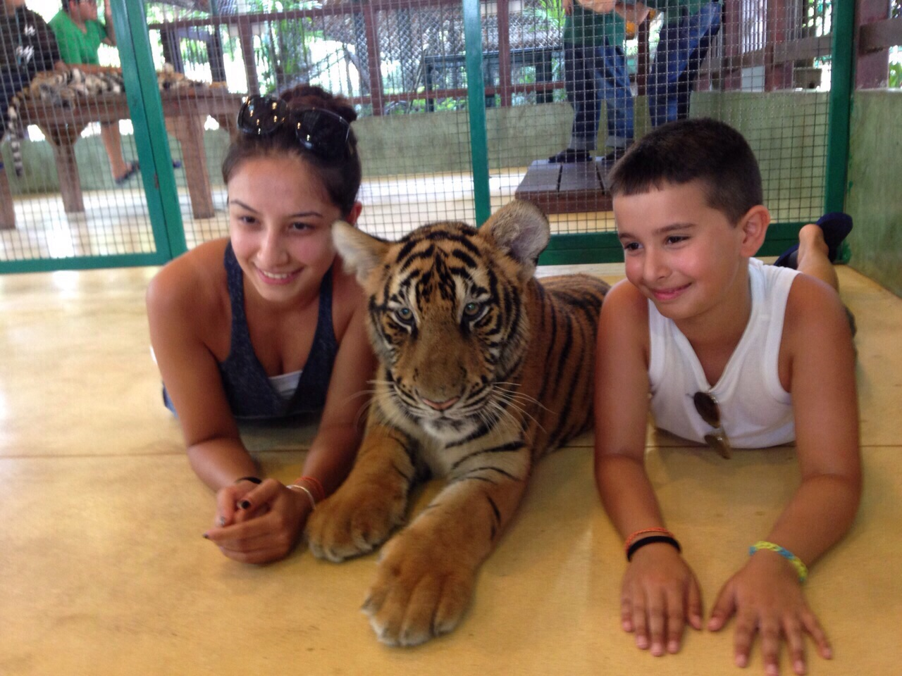 tigers and kids