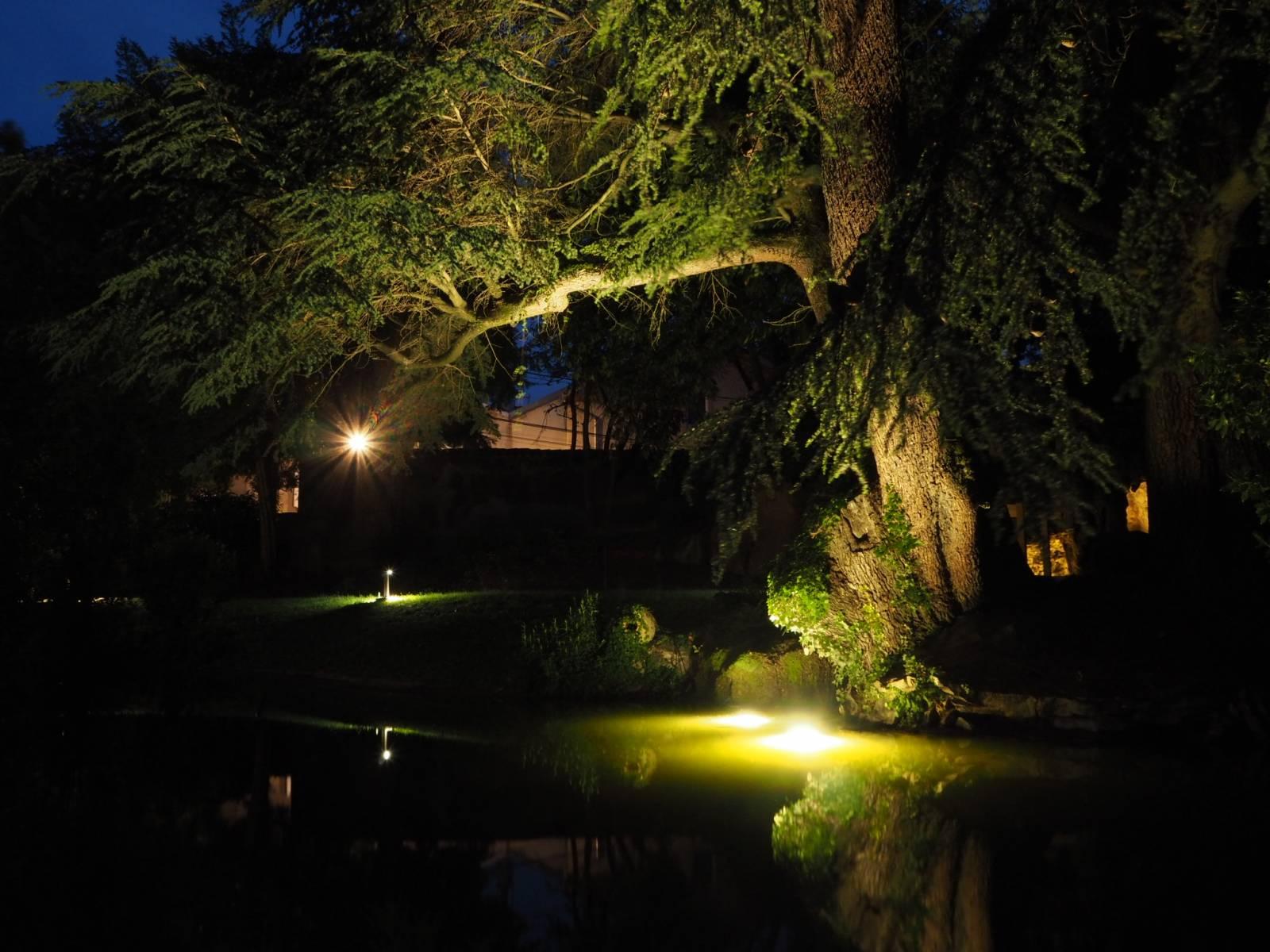 Eclairage arbres