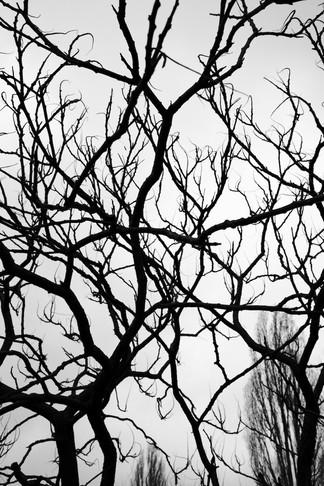 STREET_10.1.21_berlin-10 Kopie.jpg