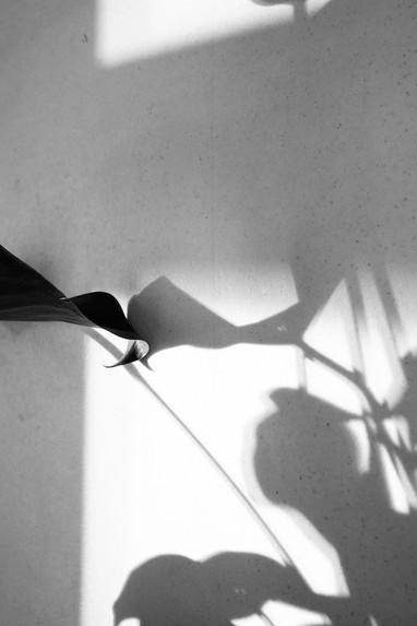 Schattenpflanze-2 Kopie.jpg