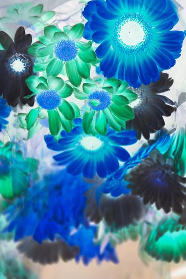 Negative Blumen Kopie.jpg