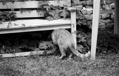 Katze_CaroLenhart Kopie.jpg
