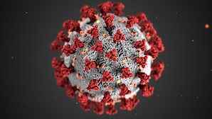 The ultrastructural morphology exhibited by coronaviruses.