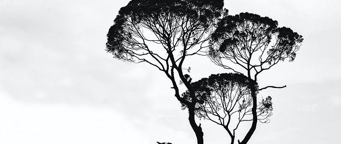 tree1_edited_edited.jpg