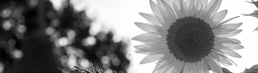 leavessun_edited_edited.jpg