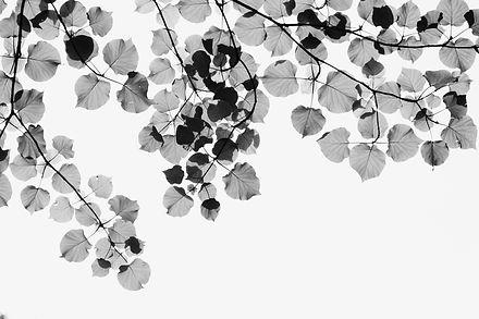 leaves5_edited_edited.jpg
