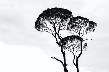 tree1.jpeg