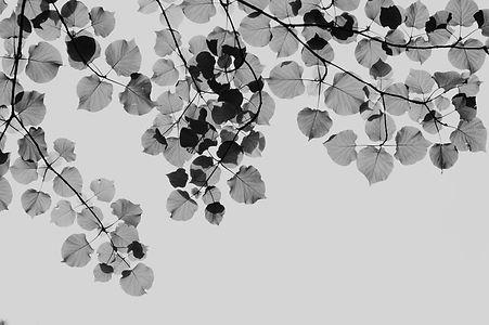 leaves5_edited.jpg