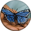 AIM butterfly Transparent.png