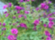 WP_20190712_15_09_29_Pro_edited.jpg