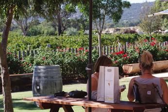 Windy Creek's gardens and vineyard