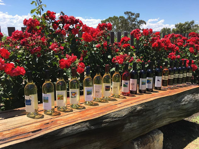 Windy Creek wine range