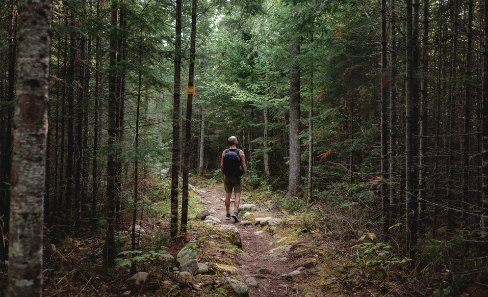 Homme forêt; Hautes gorges de la rivière Malbaie; Aventure, Marche
