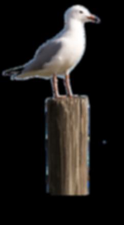 Floyd's Pesky Seagull