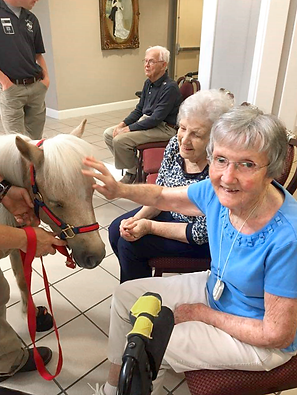 Pony therapy animal visit at Hawthorn House