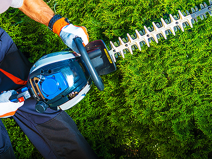 Keep your hedges looking great with our help.