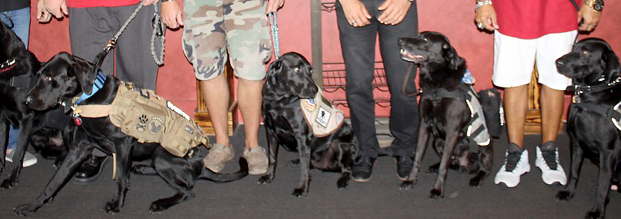 Healing Paws for Warriors helps vets and the pet overpopulation problem