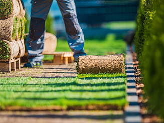 Let us resod your lawn.