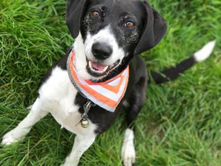 Lockdown & Self-Isolation - Keeping your dog stimulated & exercised