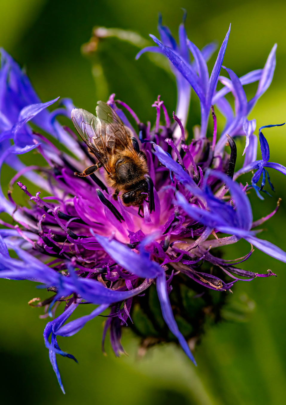 Ooh to bee Purple!!