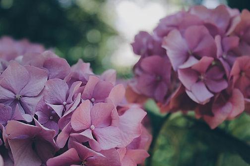 цветы в офис