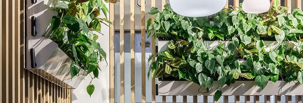 фитодизайн озеленение растения в офис вертикальное озеленение