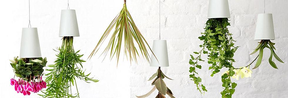 фитодизайн озеленение растения в офис sky planter