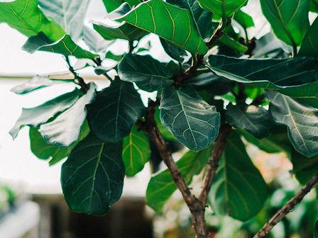 ландшафтный, дизайн, фитодизайн, озеленение, растения, офис, цветы, уход, садовник , спб