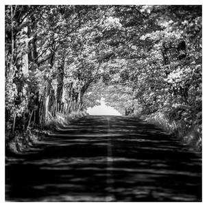 Route du Mitan, Île d'Orléans, Québec