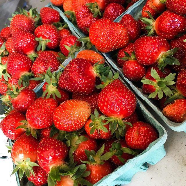 farm strawberries
