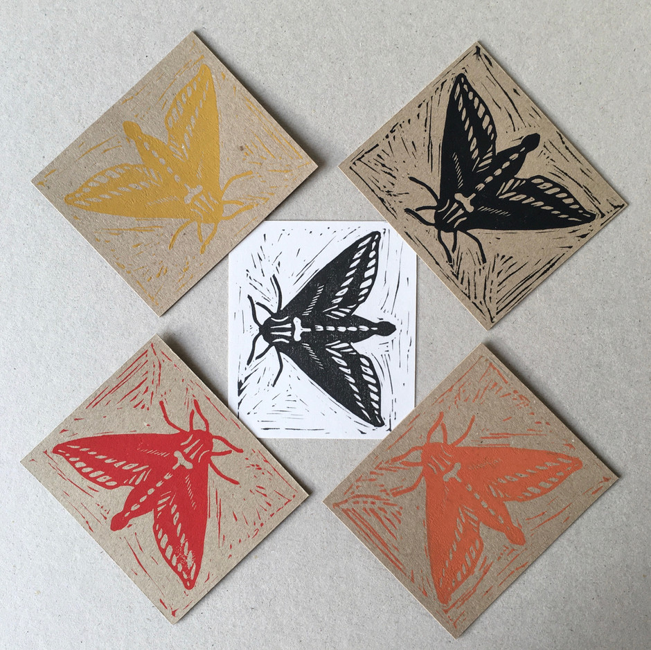Elephant-Hawk Moth