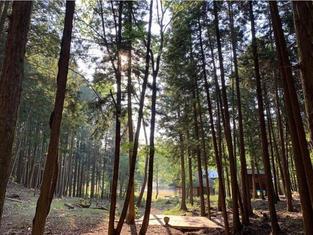 森のステージの紹介