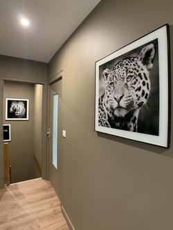Décoration du couloir avec des cadres d'animaux