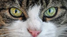 "Zack's Anger Diary: The ""Wild"" Animal Encounter"
