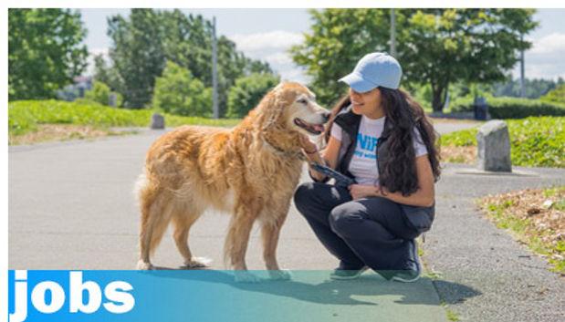 menu-professional-dog-walker-jobs-with-s