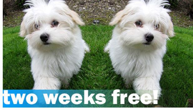 menu-get-two-weeks-free-dog-walking-from