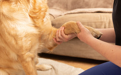 A F Pet Therapy, Bespoke Commercial Phot