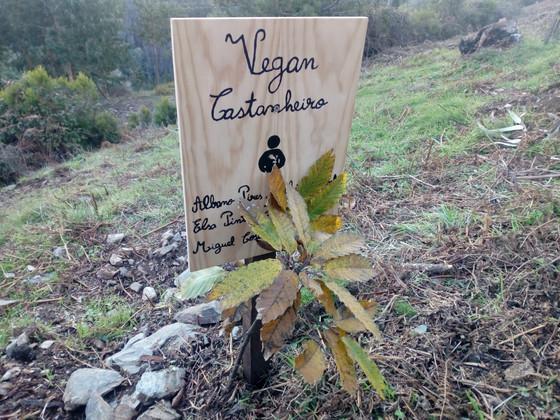 """23 de Novembro 2021 (3ª feira) """"Comemoração do Dia da Floresta Autóctone"""""""