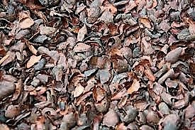 Cocoa husk fertilizer