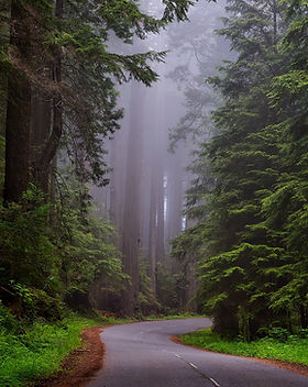 redwood-national-park-1587301_1920.jpg