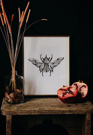 Illustration_insecte_Eléonore_M.jpg