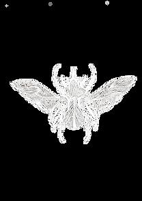 Eléonore M illustration insecte