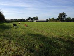Fun in the field